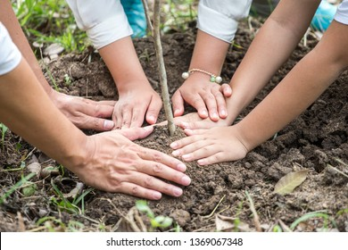 close up hands of happy asian Family, parents and their children plant sapling tree together in park . father mother and son,boy  outdoors . cheerful . volunteering, charity, people,ecology