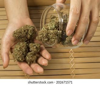 close up of hands holding marijuana buds