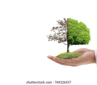 Close up hands holding a plant,tree