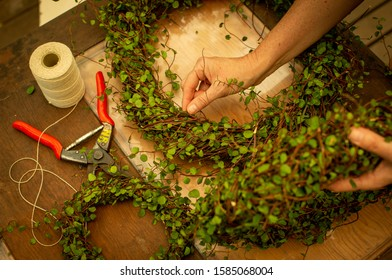 Close up of hands making maidenhair vine (muehlenbeckia) Christmas wreaths with string and red secateurs.