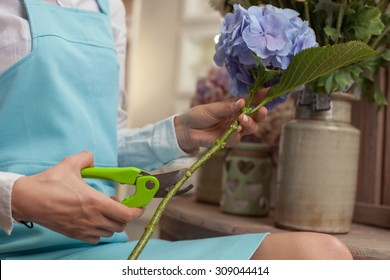 Close up of hands of professional florist holding a beautiful flower and cutting its length. The woman is sitting in her workshop
