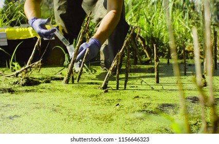 Close up hands of a woman scientist environmentalist standing in a swamp. She taking sample of water and pouring it into the test tube.