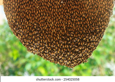 Close up of hardworking bees on hive