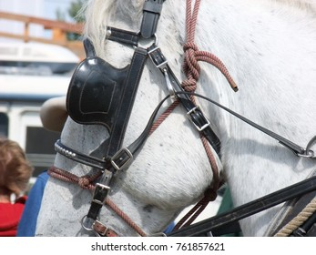Close up of harness parts on draft horses.