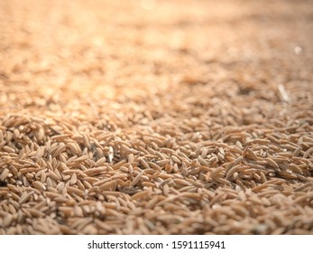 Close up harvested rice grain