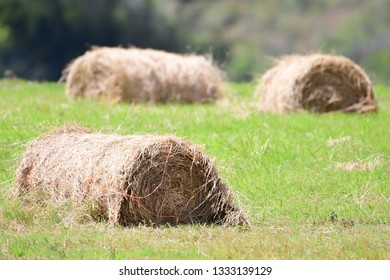 Close up of Hay bales on a green field near a mountain side