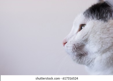 Close up of the head of a black and white cat in profile. White background. Ideal for write text