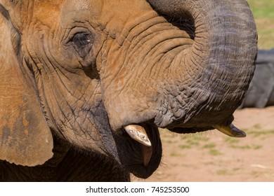 A close up of a head of an elephant
