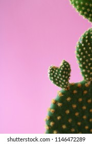 Close up of a heart shaped Bunny Ears Cactus isolated on pastel pink background.