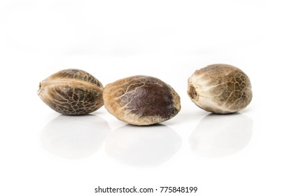 Close up of hemp seeds on white background