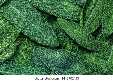 close up herb sage leaf abstract texture background