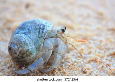 Close up of hermit crab crawling through white sandy beach.