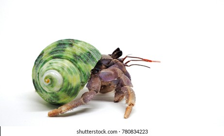 Close up hermit crab on white background, Isolated.