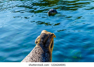 Close up of the hind legs of a Harbor Seal at Neeltje Jans island at the Delta Works Surge Barrier island in the province of Zeeland in the Netherland