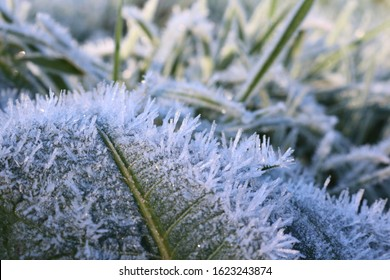 Close up of Hoar Frost in morning sunlight on a dock leaf. Shallow depth of field.