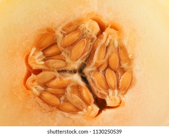 Close up of a honey melon, healthy food concept background