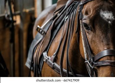 Close Up Horse Dramatic Look