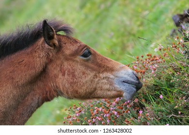Close up of horse eating flowers in a meadow