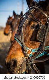 Close up of horse eye with two other horses out of focus in background in rural Strasburg, PA.