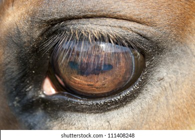 close up of a horse eye - very shallow field of depth