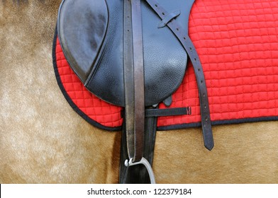 close up of a horse harness, side view
