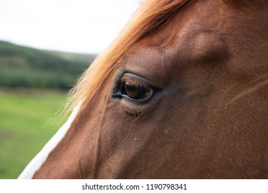 Close up horse head and eye