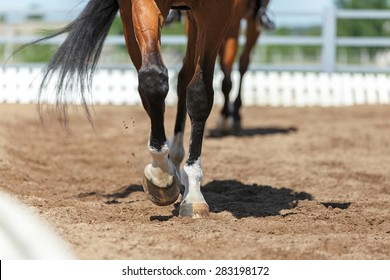Close up of the horse hooves in motion. Dressage competition.