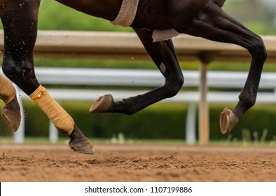 Close Up of Horse Legs All Off The Ground running over dirt track