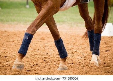 Close up of horse legs in the arena competing