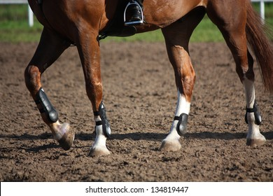 Close up of horse legs with protection boots during riding lesson