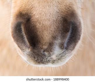 Close Up Horse Muzzle