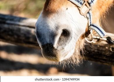 Close up of horse nostrils
