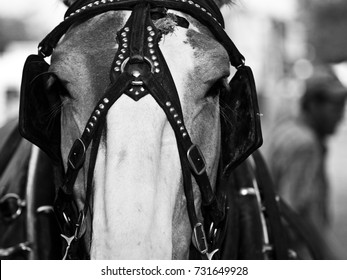 close up horse portrait with blinders