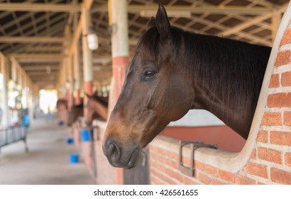 Close up Horse in stable