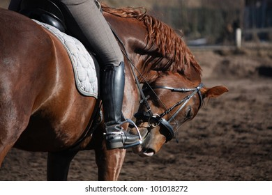 Close up of horse under the rider