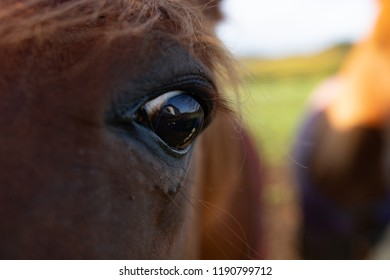 Close up horses eye