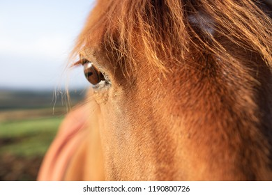 Close up horses eye sunlit