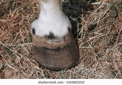 Close up of a horse's hooves
