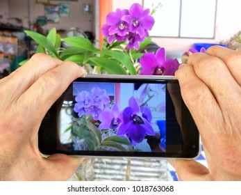 Close up of human hand is taking photo of purple orchids with mobile phone