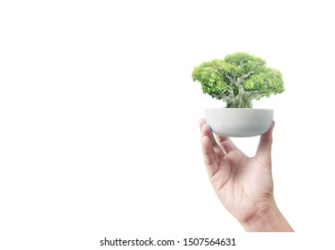 Close up of human hands holding sprout,tree