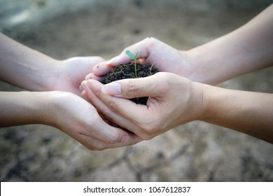 Close up human hands holding a young plant in soil. Two hands of the men was carrying potting seedlings to be planted into the soil. Concept world environment day and save the world.
