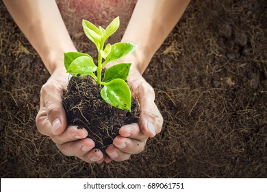 Close up human hands holding a young plant in soil background with sunlight.New life concept.