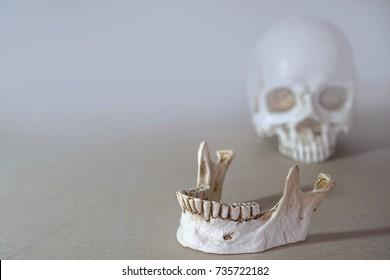 Close up of human jaw skeleton