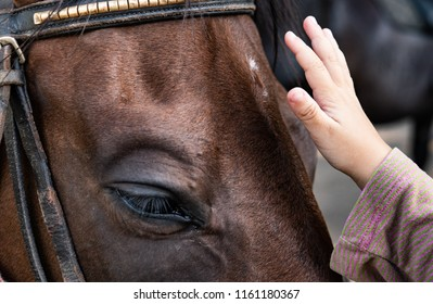 Close up of human kid hand touching and caressing horse muzzle, horse therapy