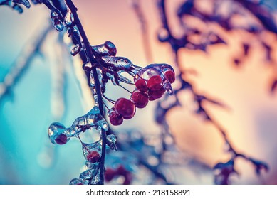 A close up of ice covered crab apples on a tree.  Photographed with a shallow depth of field.  Filtered for a retro, vintage look.