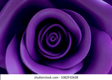 Close up image of beautiful black-purple rose with blur