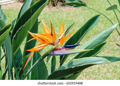 Close up image of a Bird of Paradise Flower