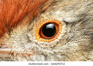 Close Up Image of a Bird's Eye Macro, Olive-backed sunbird, Yellow-bellied sunbird;