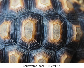 A close up image of black and brown turtle shell