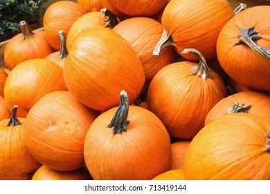 Close up image of bright orange harvested Pumpkins